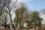 koninginnedag-volkspark-2012-8486.jpg